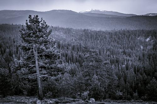 view california usa landscape unitedstates trees overlook mountains blackandwhite bw monochrome lumix dmcfz1000