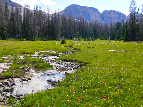 Gorgeous meadows in Middle Basin | by snackronym