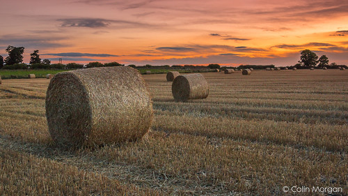 field harvest rudchester sunset wheat corn stubble bale hayroll hay
