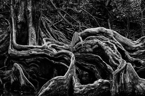 Roots | by mripp