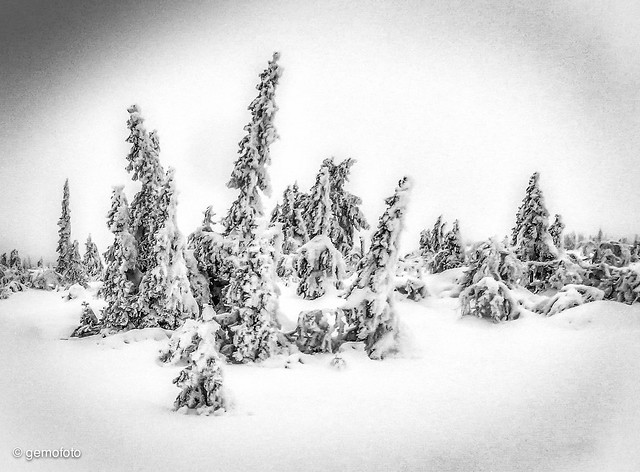 Snow, trees and troll