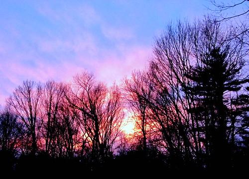 sunset pinkblue putnamcounty treesilhouettes carmelny winter2015