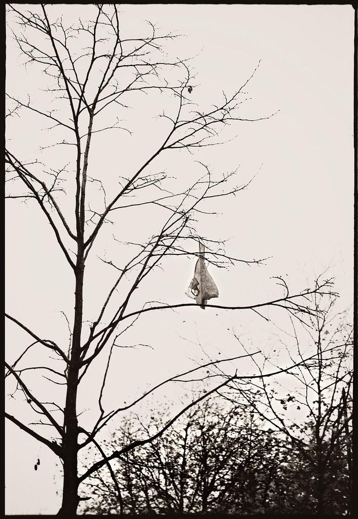 Retina Ia (early) - Bag in a Tree, Swindon