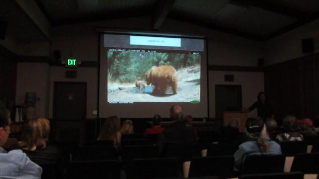 MVI_8724 Kate McCurdy UCSB Sedgwick bears video