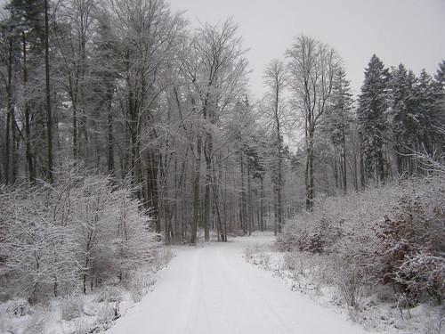 las winter nature forest poland polska natura zima gdansk danzig gdańsk przyroda pomorze pomorskie