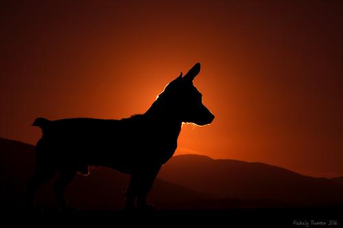 outdoor sky sun sunset summer colorful dog animal cannine friend silhouette red canon 7d pet padraig thornton manorhamilton coleitrim ireland greatphotographers autofocus