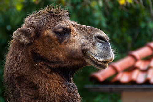 Hi, My Name Is Hank Camel And Today I'm Gonna Tell You Something About Roofs