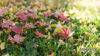 Blätter | Projekt 365 | Tag 303