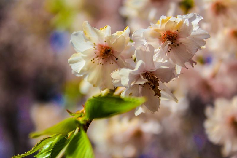 2014-04-19_00073_美の山.jpg