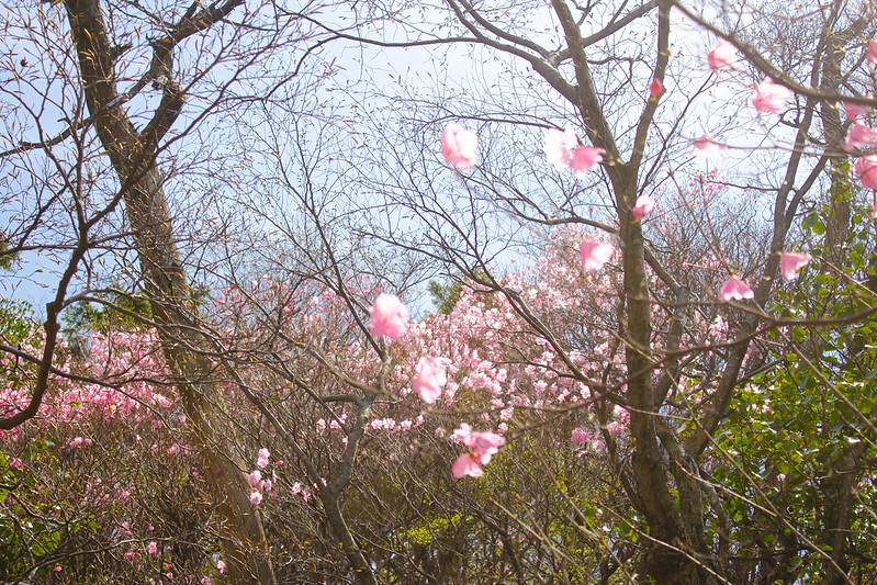 2014-05-06_02527_九州登山旅行.jpg