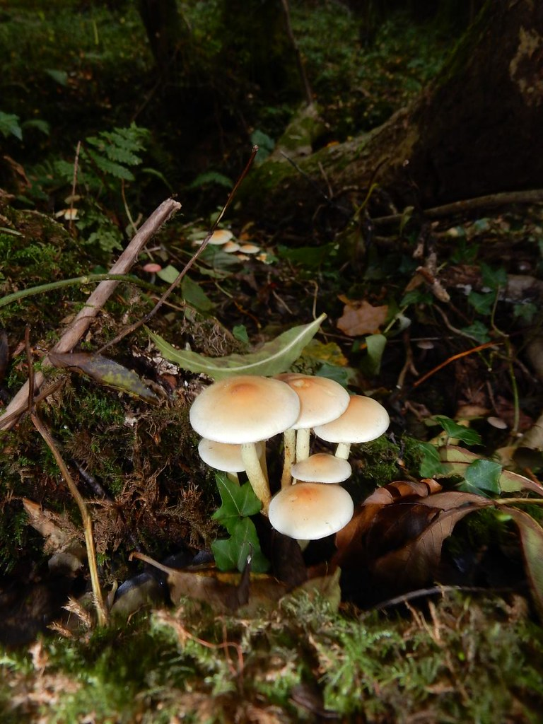Fungi Witley to Haslemere