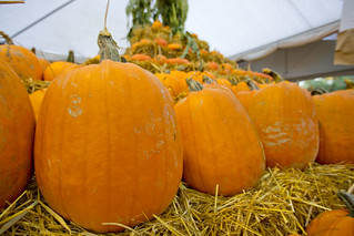 Pumpkins @ Richmond Country Farms Market | by GoToVan