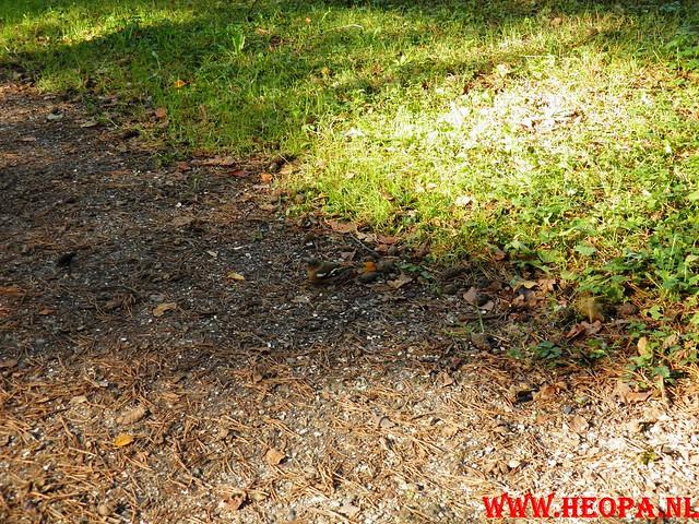 22-10-2011             Driebergen         26 km (167)
