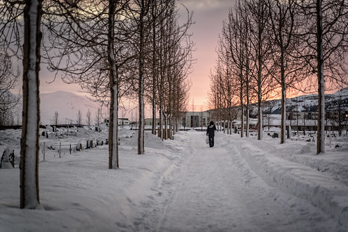 path tamron d750 nikon sunset vanishing people cementery walking outdoor gravestone ground snow religious burial tree graveyard akureyri tombstone hills travel iceland winter commons mountain northeast is