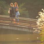 japanese pampas grass bridge