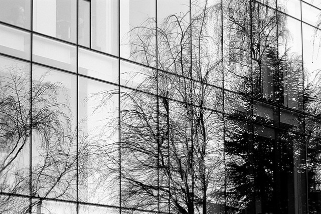 Reflection in glass