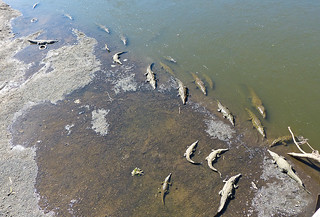 Crocodiles from the bridge at Rio Tarcoles | by tctyin
