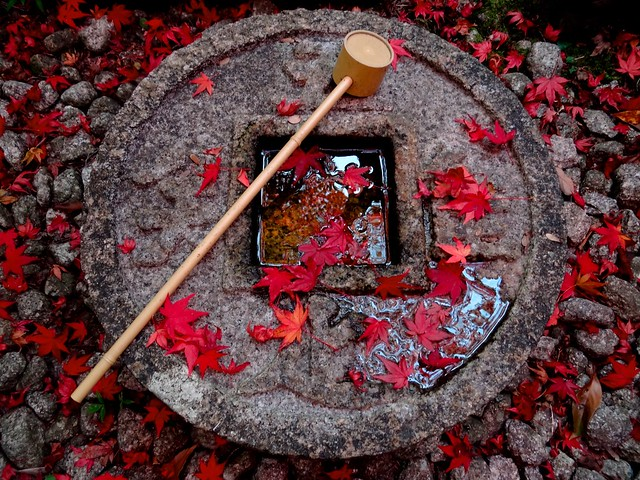 Kyoto Momiji 2014 Ichijoji 47