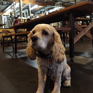 Introducing Daisy to #SanDiego beer scene at @SocieteBrewing #dogstagram | by queenkv