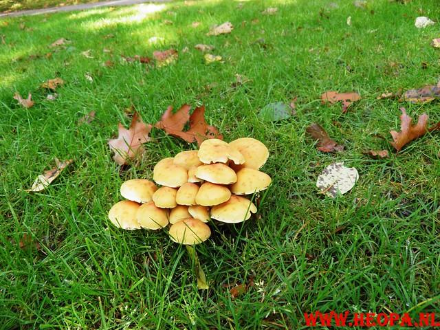 22-10-2011             Driebergen         26 km (119)