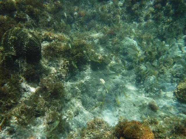 水, 2016-07-13 10:52 - 魚の群れ