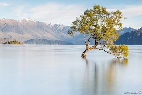 longexposure newzealand mountains tree landscape lone otago wanaka nouvellezélande canoneos5dmarkiii