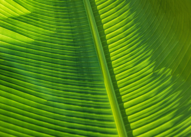 Palm Leaf bottom up