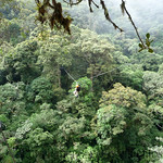 03 Viajfilos en Panama. Canopy en Boquete 16