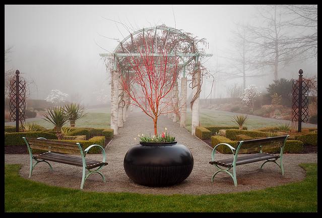 Fog in Fleetwood Gardens