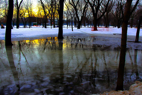 park trees sunset ice water yellow jaune reflections soleil eau montréal coucher arbres parc lafontaine coucherdesoleil glace réflexions