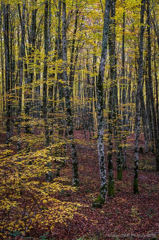 Lo que el bosque no deja ver