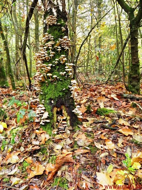 20-10-2012     Wedeblick-   Driebergen        25 Km (96)