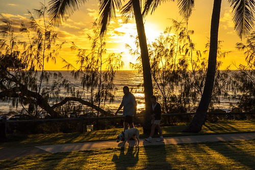 silhouette sunrise tropical walker