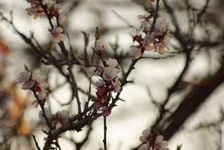 Цветущий вечер / Blossoming evening | by Владимир-61