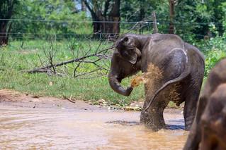 Elephant Transit Home   by seghal1