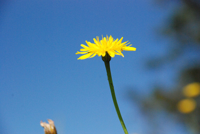 Flower, Oregon