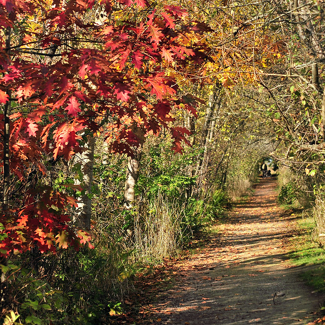 where autumn beckons . . .