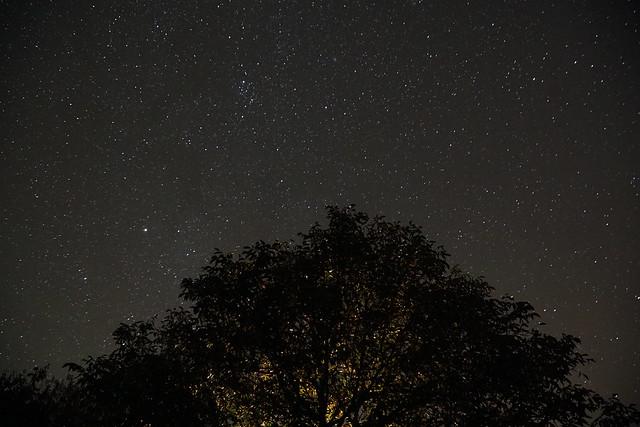 walnut tree in the night