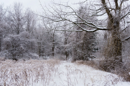 trees winter snow cold nature landscape sony snowstorm scenic rye snowcovered marshlands
