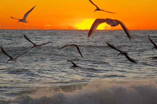ocean seagulls beach sunrise dawn florida indialantic