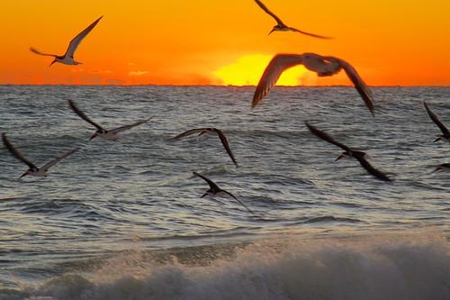 ocean seagulls beach sunrise dawn florida indialantic