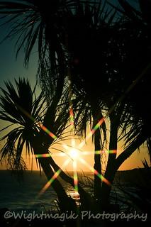 Evening through the palms.
