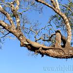 14 Viajefilos en Sri Lanka. Yala 07