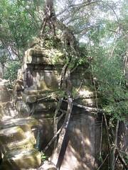 #7484 Chinese banyan (ガジュマル) attacking ruins