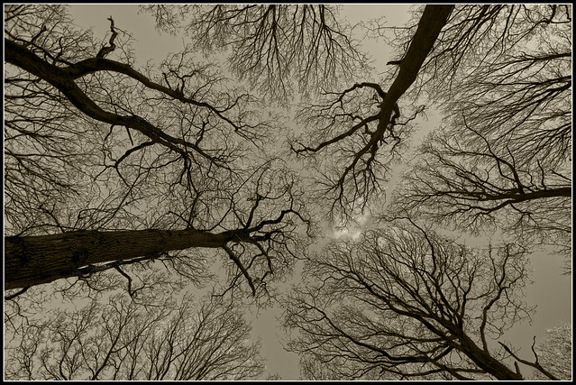 'Roots in the sky'