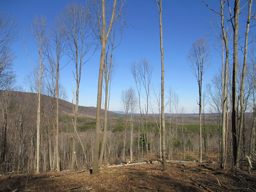 Select cut hardwoods- new ridge views