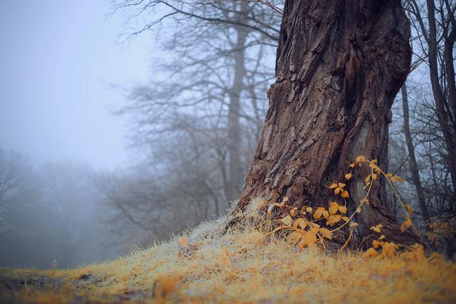 Gnome In The Fog