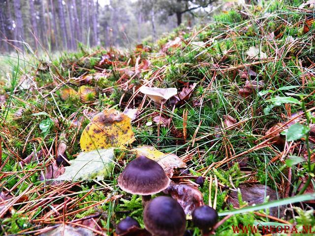 20-10-2012     Wedeblick-   Driebergen        25 Km (86)