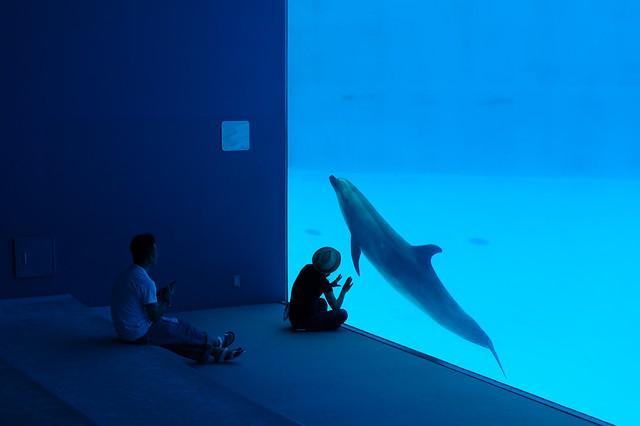20160712 Port of Nagoya Aquarium 6