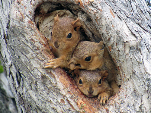 squirrels | by lasjuly